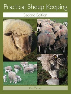 Sheep, Sheep News, Sheep Articles, Sheep Photos - The Sheep Site