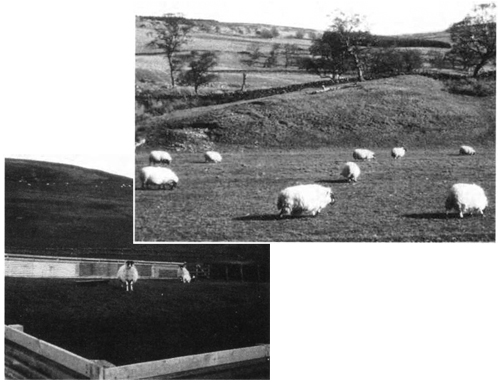 Lambing enclosure on a hill farm and individual pens for problem cases in inaccessible areas - The Veterinary Book for Sheep Farmers